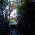 高桐院参道