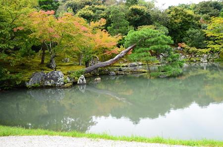少し色づいた曹源池