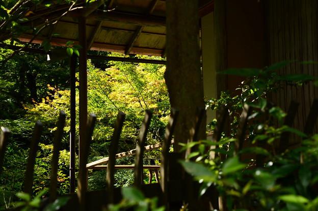 大原西陵参道から見る紅葉