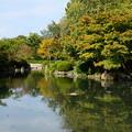 写真: 色づきを映す瓢箪池