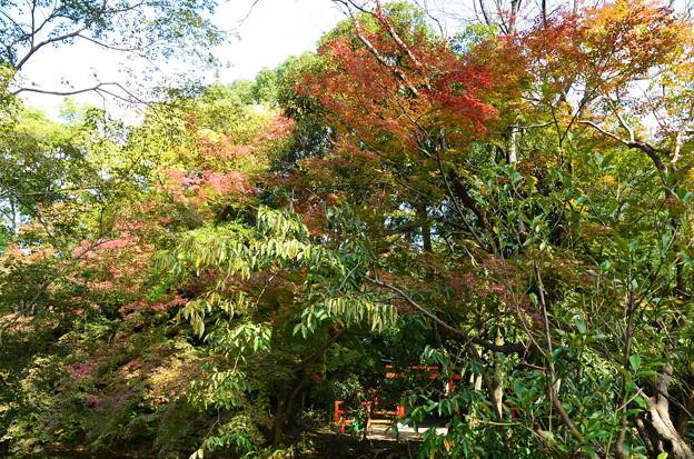 色づき始めた府立植物園
