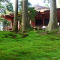 緑の苔と常行堂