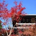 Photos: 山門を染める紅葉と桜もみじ