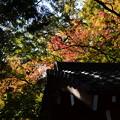 Photos: 西雲院の色付き