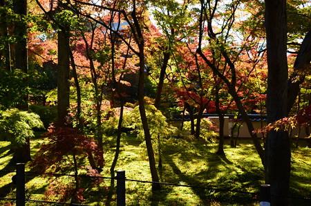 煌めく苔と紅葉