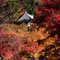 写真: 紅葉の中のお堂