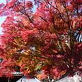 釈迦堂前の紅葉