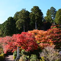 写真: 釈迦堂後ろの紅葉