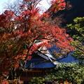 写真: 阿弥陀堂の色付き