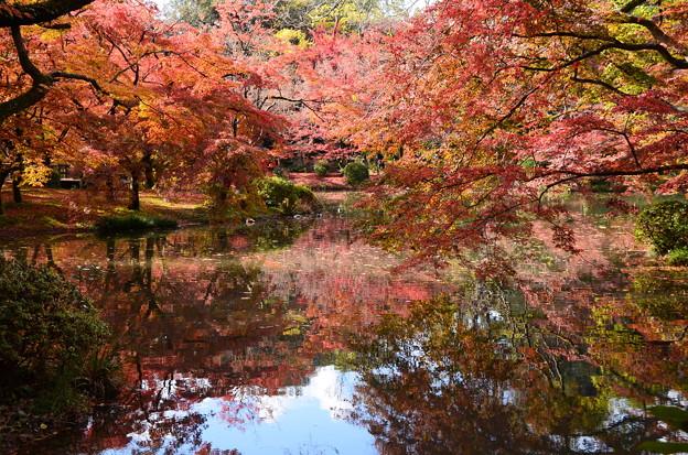 秋を映す池