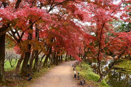 紅葉に蔽われる散策路