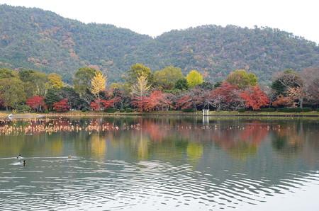 大沢の池秋景