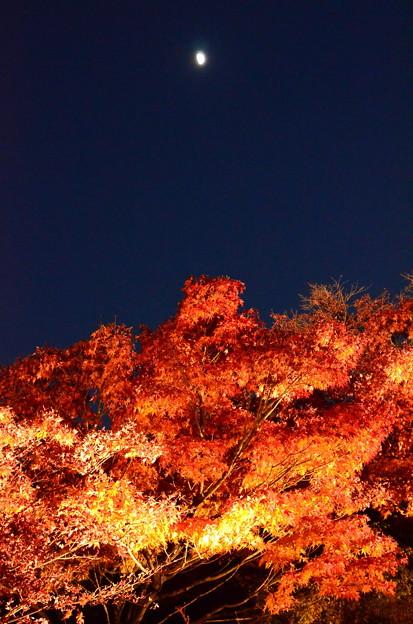 ライトアップされた紅葉の上の半月
