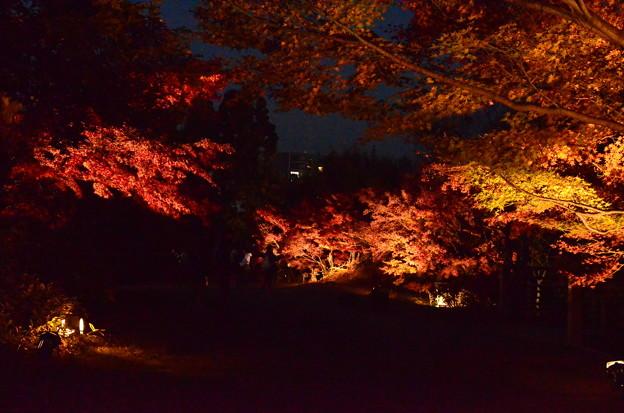 朱雀の庭のライトアップ