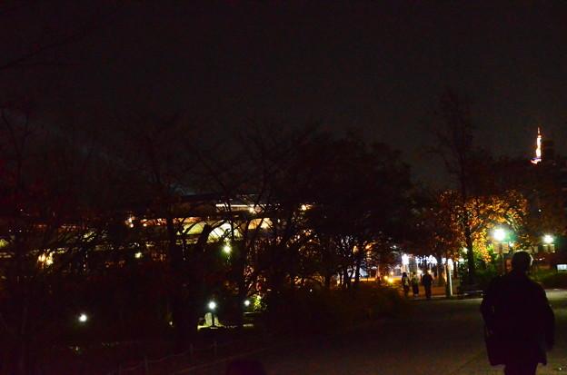 梅小路公園の夜景