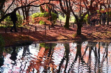 初冬を映す池