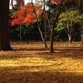 黄金色の地面と紅葉