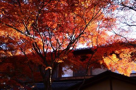紅葉の燦めき