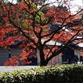 初冬の紅葉景色