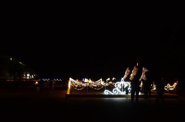 クリスマスイルミネーションの京都府立植物園