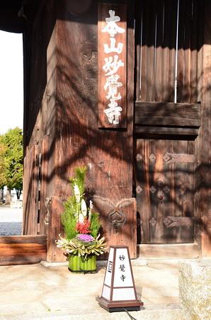 妙覚寺の門松