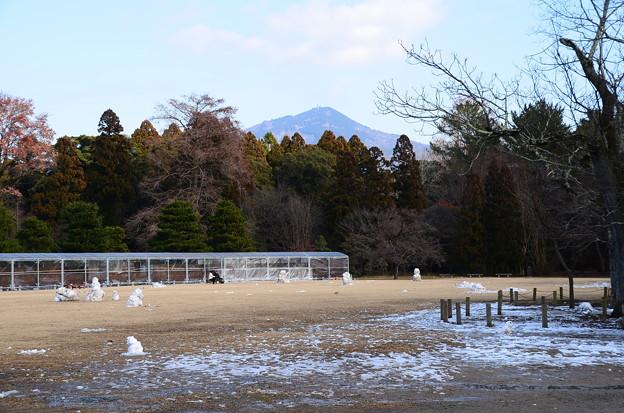 雪の残る植物園