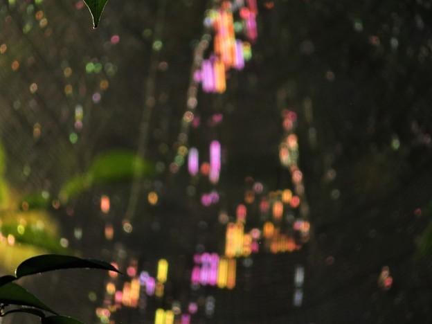 虹色蜘蛛の巣_7354