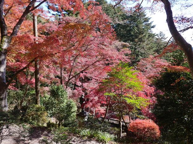 東郷公園171119-079