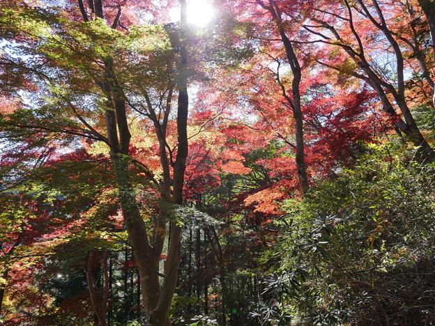 東郷公園171119-088