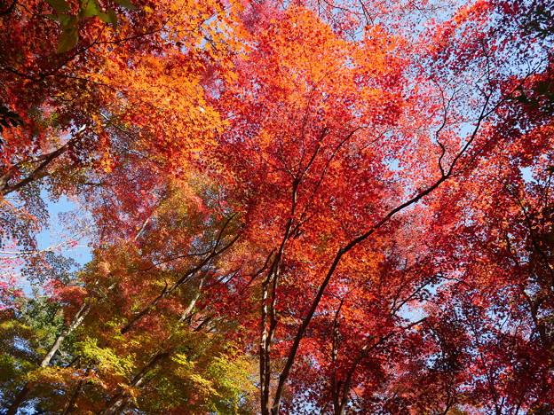 東郷公園171119-089
