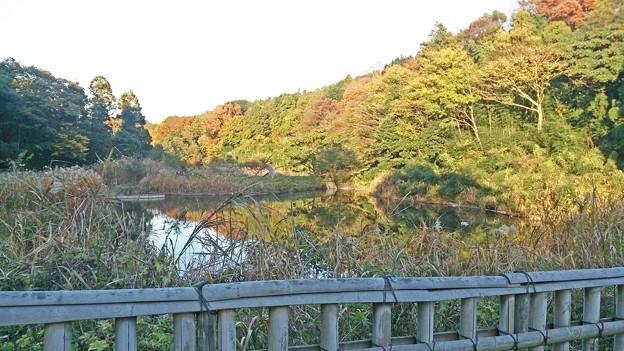茅ヶ崎里山公園 景色