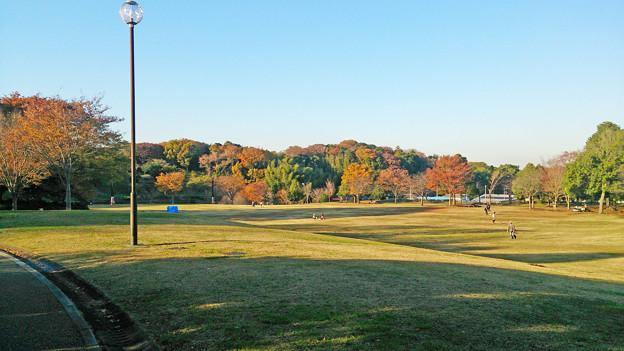 茅ヶ崎里山公園 芝生