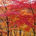 Photos: 西山公園4