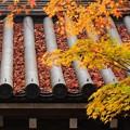 写真: ・秋風が この葉を揺らす さらさらと・