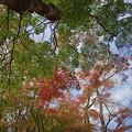 Photos: 171113_箱根・湖尻_紅葉風景_F171113G2858_MZD12ZP_FH_for C-SG_FS2_X8Ss