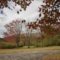 Photos: 171113_箱根・湖尻_紅葉風景_F171113G2876_MZD12ZP_X8Ss