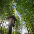 「竹林の印象」_F171128G2988_MZD12ZP_X8Ss