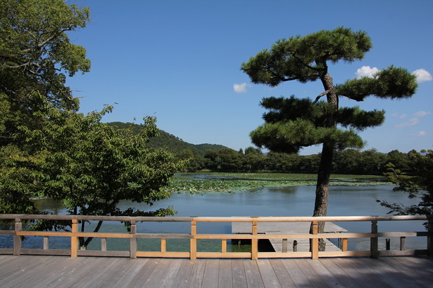 大覚寺からの大沢の池