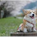 *Happy Smile animal*