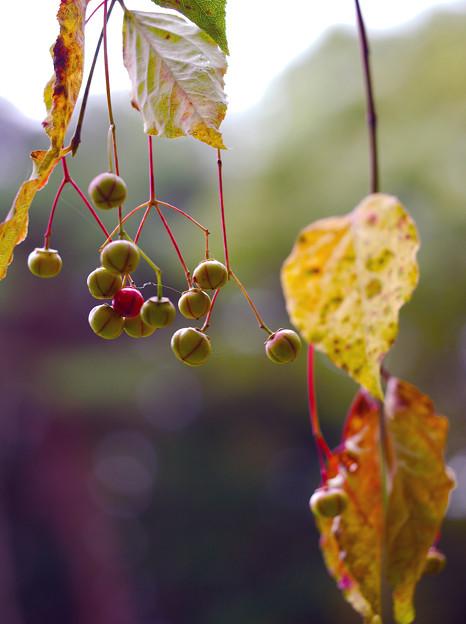 写真: 秋を感じて