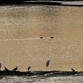 水鳥の憩いの場