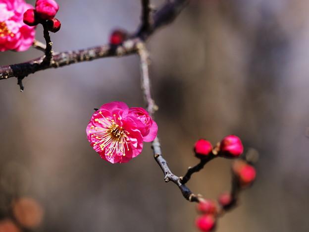 写真: 春の香り2