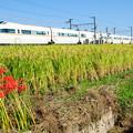 写真: 稲穂と彼岸花とロマンスカー
