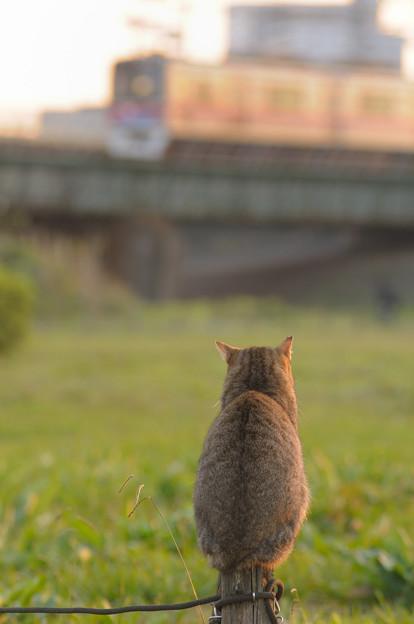 Photos: 猫と電車