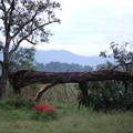 写真: 倒木と彼岸花