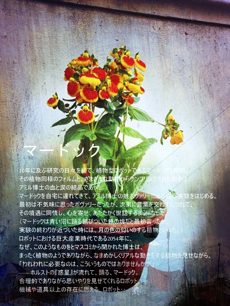 AVE写真illus.詩N1477 1509-2 No.12
