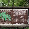 写真: 石巻さ山多米自然公園ハイキングコース案内
