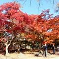 Photos: 欅広場の紅葉