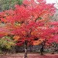 写真: 園地の紅葉