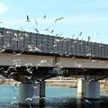 写真: ユリカモメの飛翔